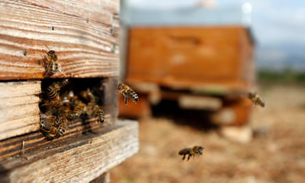'It was like a chop shop for bees.'