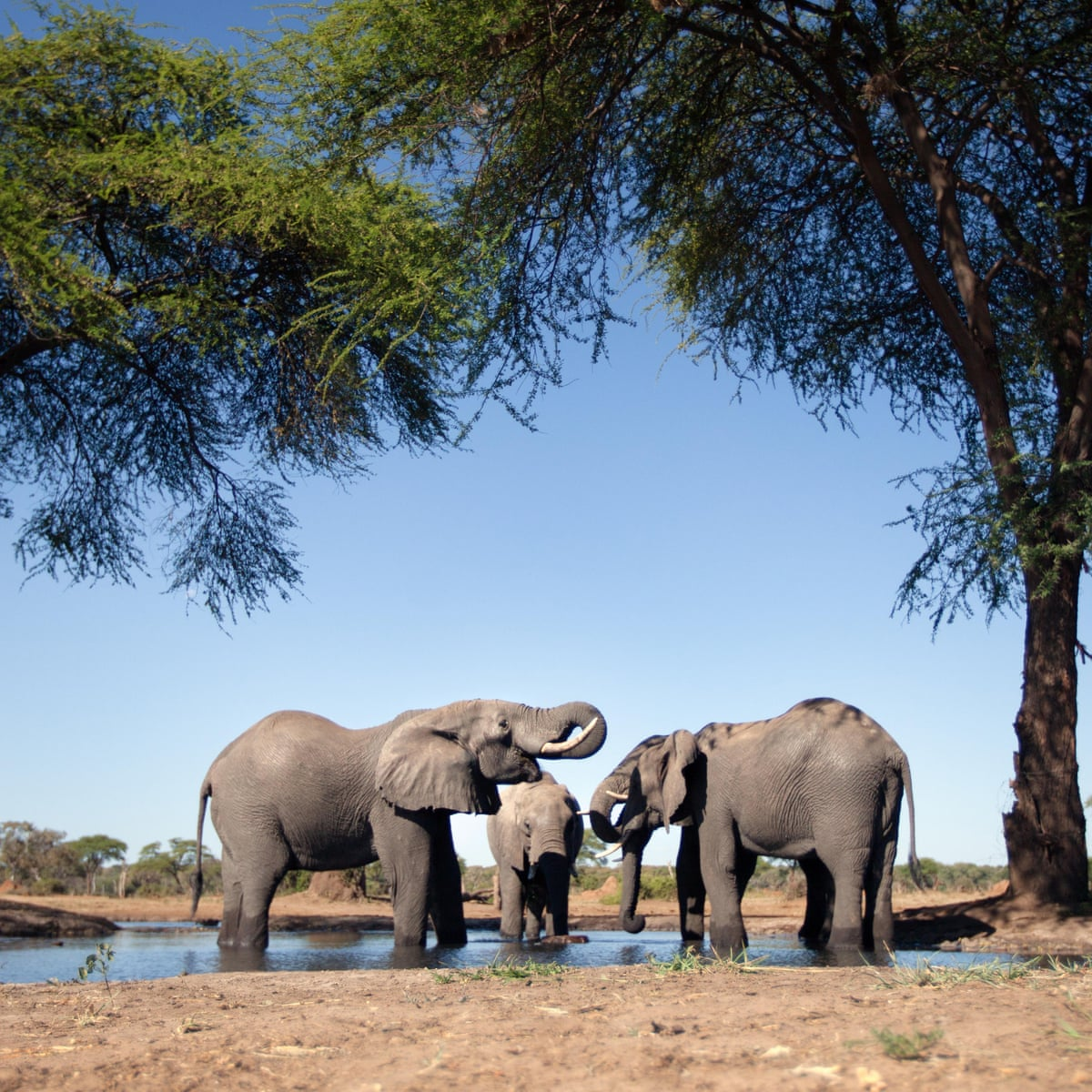 Namibia forced by drought to auction 1,000 wild animals | Namibia | The Guardian