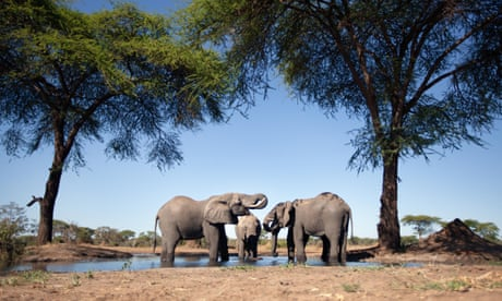 Namibia forced by drought to auction 1,000 wild animals