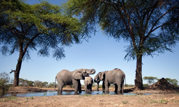 Elephant at a waterholeThe animals Namibia intends to sell include 28 elephants.