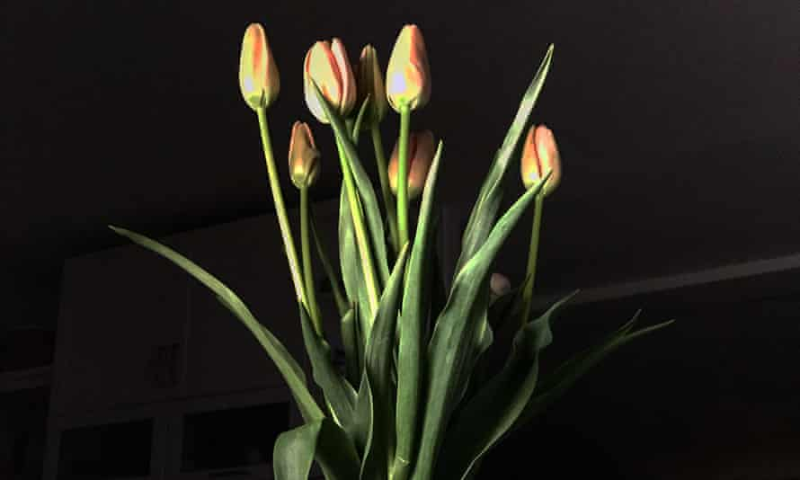 The look of love: tall amber-coloured tulips make an elegant Valentine's bouquet.