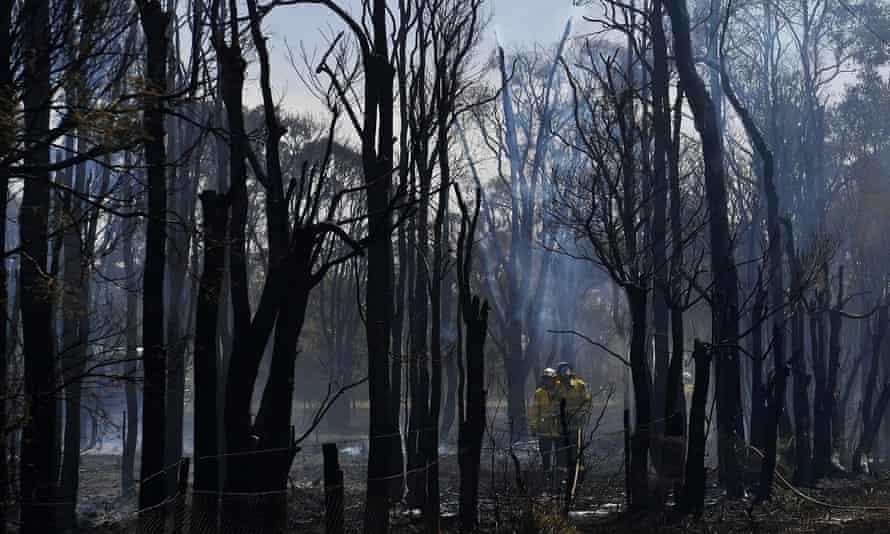 Bushfire in New South Wales, Australia