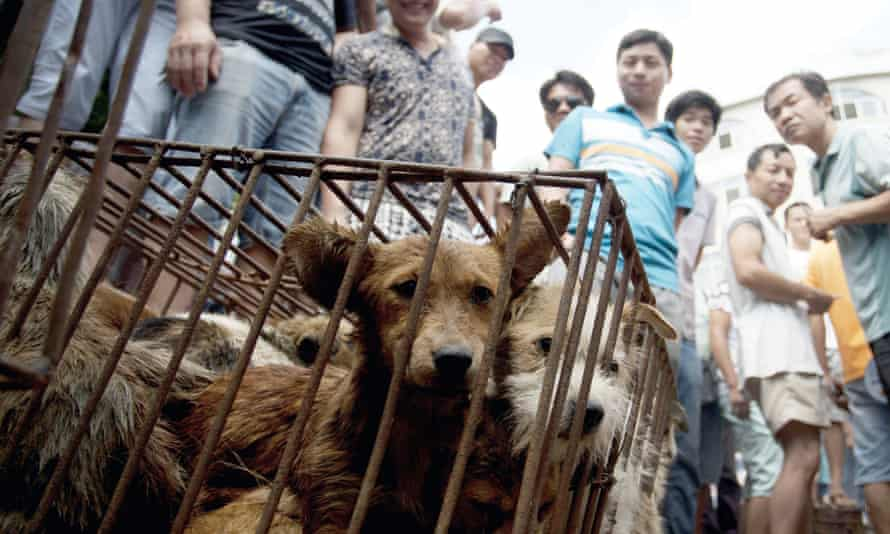 Dogs in cages are sold by vendors at a market during a dog meat festival in Yulin.