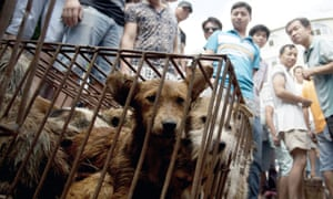 A market sells dogs during an annual dog meat festival in Yulin in south China.