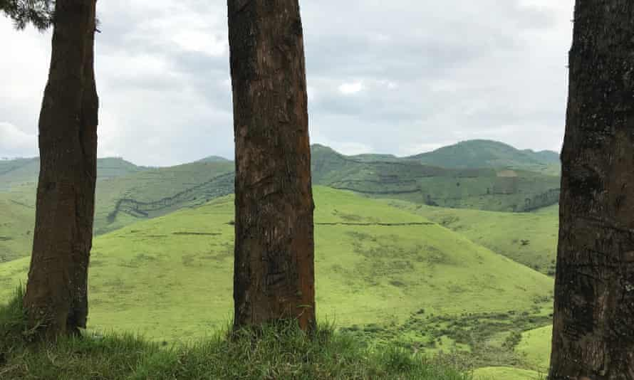 Green and fertile land in Democratic Republic of Congo.