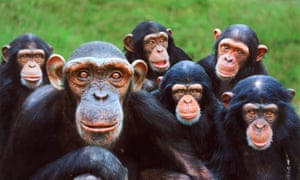 Group shot of Sally & The Boys (they are monkeys) at Monkey World Ape Rescue Centre, Dorset.