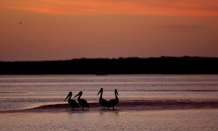 Birds at sunrise on the Coorong near the mouth of the Murray River where it flows into the Great Australian Bight.