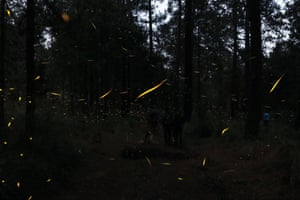 Thousands of fireflies come out to mate in the forests of Ejido Miguel Lira y Ortega, in Nanacamilpa, Mexico