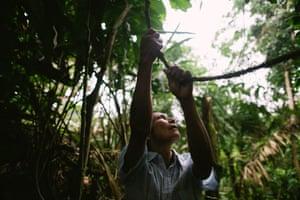 Jorge Zukanká, 47, collects ayahuasca vine for a ritual