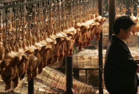 Chickens in a poultry market in Wuhan, in 2005.