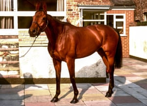 Red Rum in McCain's Southport yard