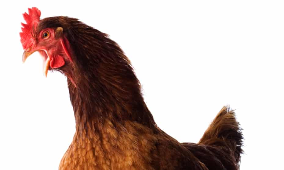 'To me, a chicken worth eating tastes like a chicken that had a life worth living'.