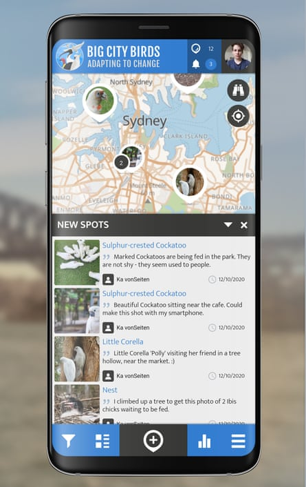 Big City Birds project. A new app has launched that will allow users to record the whereabouts of urban birds.