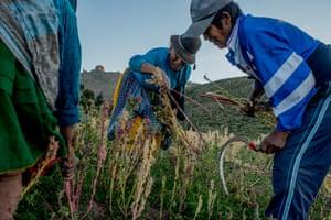 Quinoa farmers in Puno, Peru