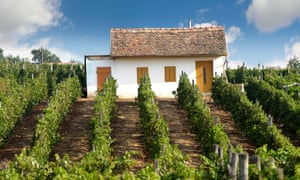Shimmering deliciousness: a pretty house in a vineyard in Hungary.