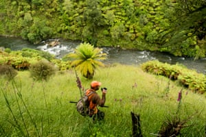 Hunting the steep bush country above the Whanganui River