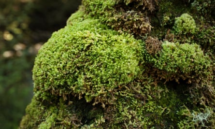 Low-growing moss drew carbon from the air, created topsoil for the first vascular plants, and in 40 million years or so increased oxygen in the atmosphere to levels that endure today.
