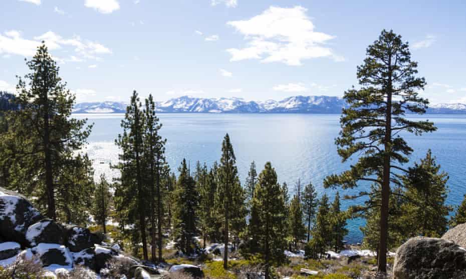 trees beside lake tahoe