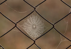 A spider is seen hanging from a web on a fence at Rakhine State