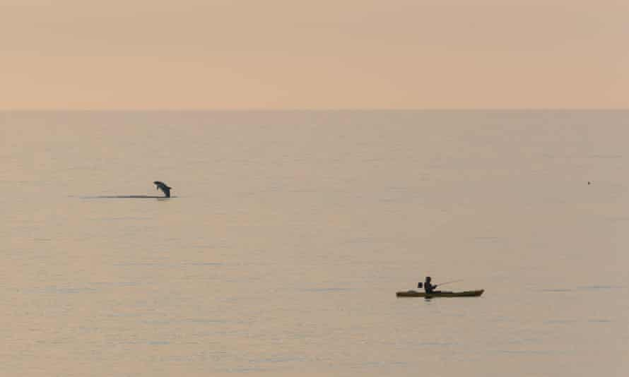 A kayaker and a dolphin in Cardigan Bay.