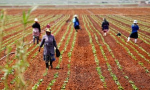 Farm workers stand in a field at a farm in Klippoortie, east of Johannesburg, where Gulf states are looking to invest