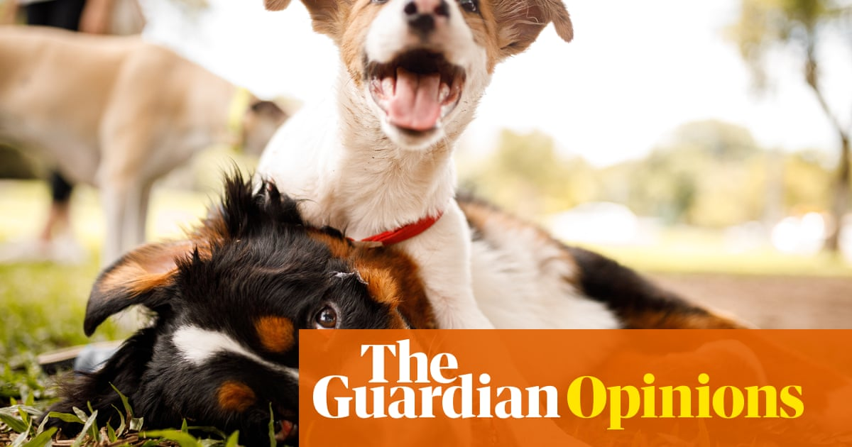 Just got a puppy? Here's what a terrier called Arthur taught me about love