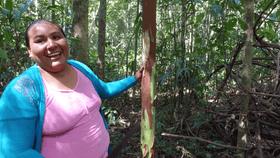 """Doña Teo, an indigenous Tacana woman who has expressed serious concern about BGP's operations in Bolivia. Tacana organization CITRMD has condemned the company for its response to recent near encounters with indigenous people in """"isolation."""""""