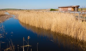 Reedbeds, bird hide and Thames inlet on Rainham Marsh, Essex.