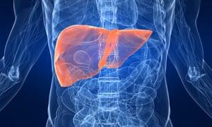 A human liver