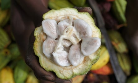 A cacao seed