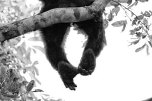 Mammals category runner-up: Scratching