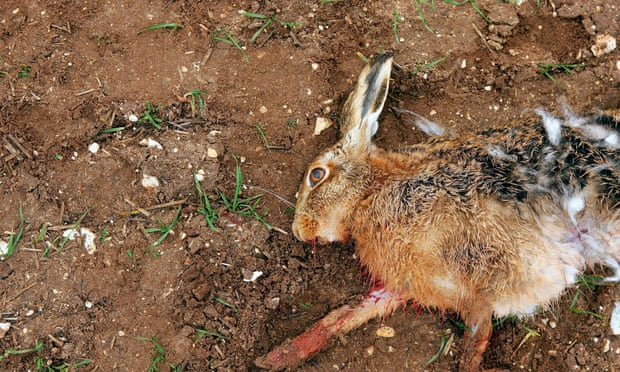 POLL: Should the National Wildlife Crime Unit be properly funded by the British Government?