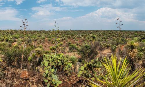 A spectacular desert landscape where agave is extracted for mezcal in Nombre de Dios, Durango, Mexico.
