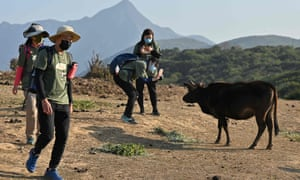 Volunteers taking photos of cattle on the remote Tap Mun (Grass Island) in northeast Hong Kong as the animals struggle to find enough food thanks to a sudden influx of day-trippers and campers in a city where international travel has been all by stamped out by the COVID-19 coronavirus pandemic.