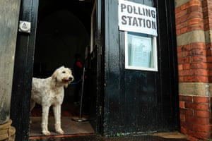 A dog at a polling station in Howden