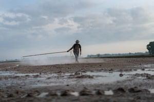 Veasna, a smallholder farmer, sprays pesticide over his field