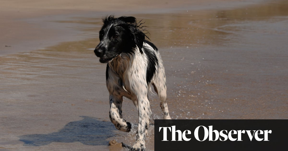Dog theft law gets more bite with new 'pet abduction' offence