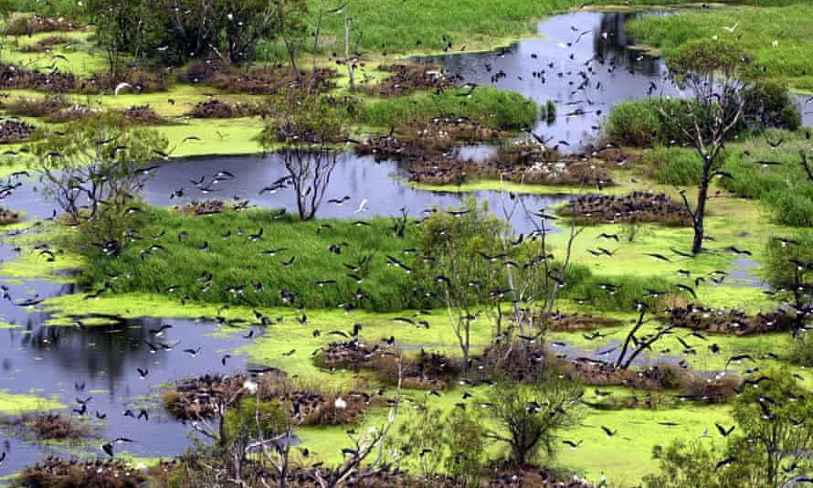 Waterbirds breeding at Macquarie Marshes. The wetland and inner floodplain of the Macquarie Marshes and the Lower Murray River and associated wetlands, floodplains and groundwater systems from the junction of the Darling River to the sea.