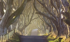 Here comes the sun: a beautiful morning at the Dark Hedges in from County Antrim.