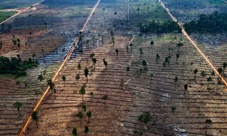 Indonesia forest clearing
