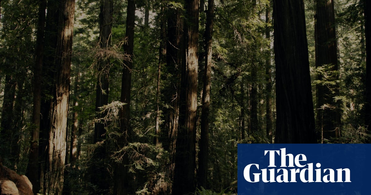 'I am now truly afraid of the woods': behind the hunt for Sasquatch