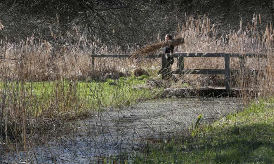 The Great Fen project aims to save ancient marshland, such as Woodwalton
