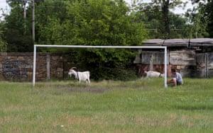 Goats walk near a goalpost in the village of Pervomayskoye, Crimea