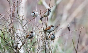 Last year saw sparrows top the list of the most commonly seen garden bird.