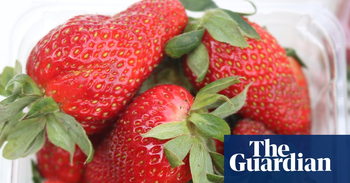 Australian strawberries pulled from New Zealand shelves after needles found | World news | The Guardian