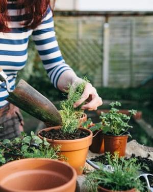 Woman potting small plant