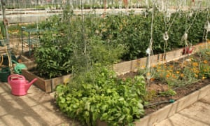 Raised beds at OrganicLea.