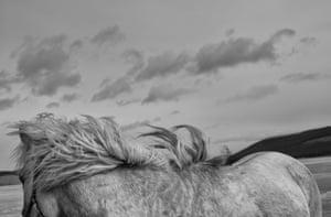 A horse's mane blows