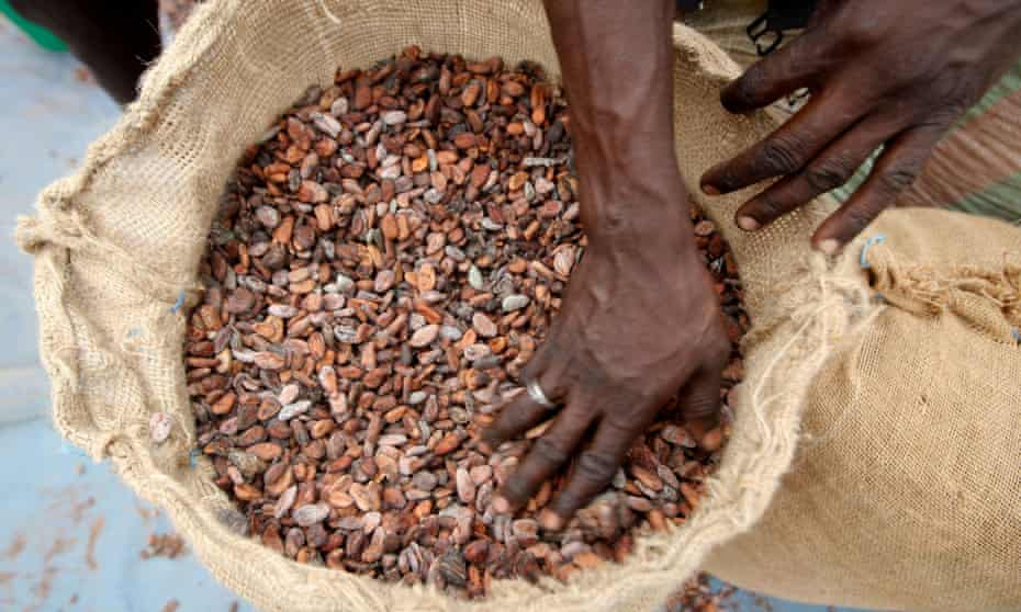 From bean to bar: cocoa beans are prepared for sale.