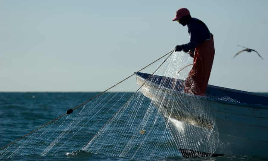 Gillnets are the primary cause of vaquita deaths in the Upper Gulf of California, Mexico.